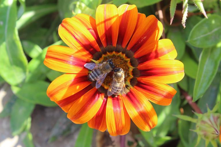 Antrag auf bienenfreundliche Bepflanzung am Rathaus